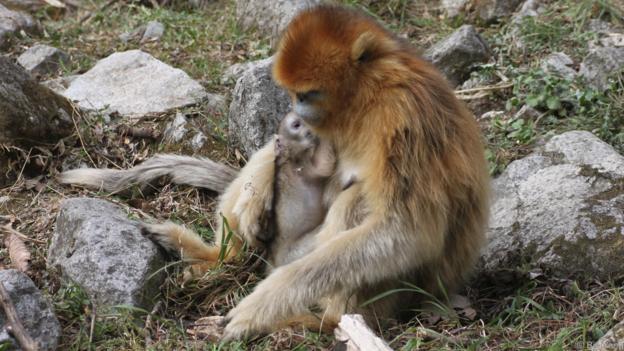 Шест дена след раждането, майката и бебето изглеждат в добро здраве. Credit: Bin Yang