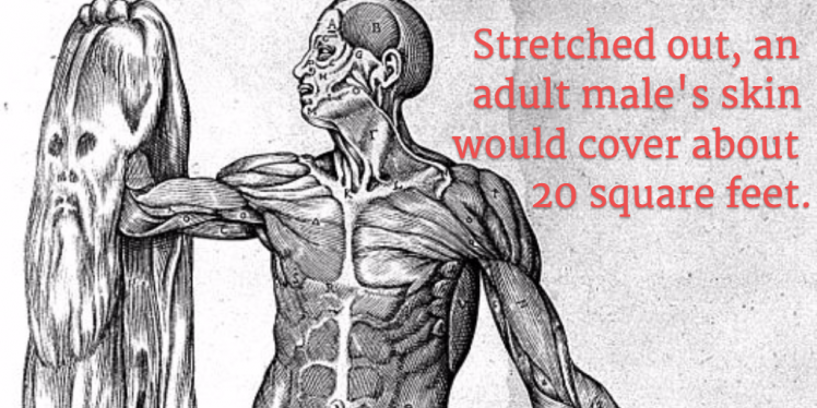 40-strange-and-amazing-facts-about-the-human-body12