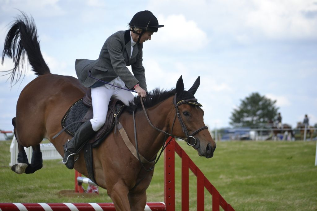 horse-965625_1920