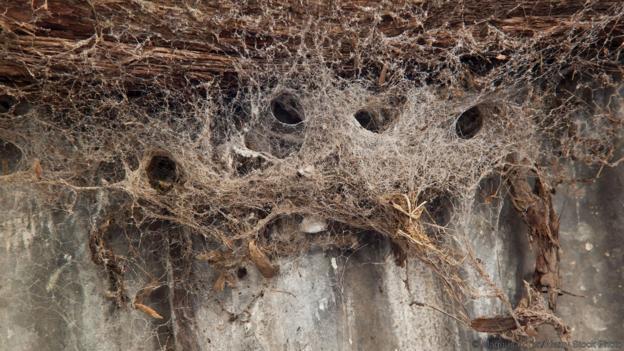 Построяването на паяжина изисква много работа