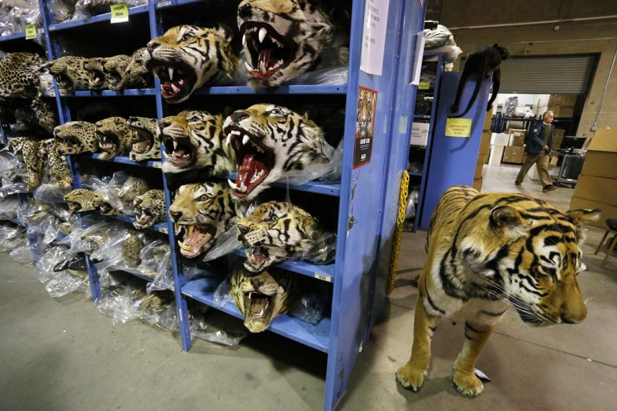 endangered-species-wa_nh