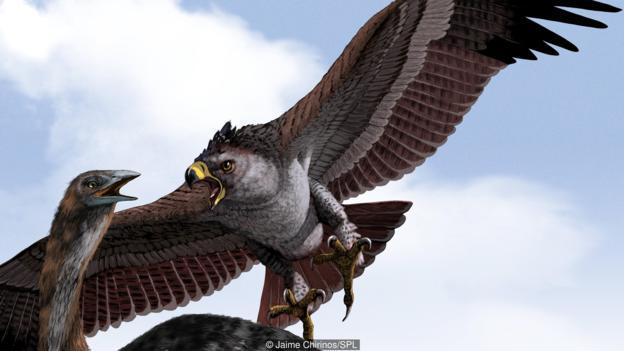 Орелът на Хааст е най-големият орел, живял някога