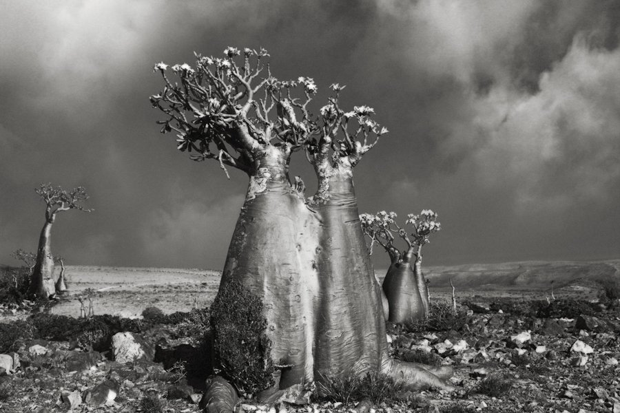 Пустинна роза (Wadi Fa Lang). Фотография: Бет Муун