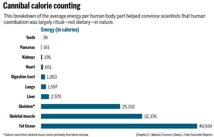 Брой на калориите за канибали. Този статистически анализ на средната енергия в частите на човешкото тяло помогнал да убеди учените, че човешкият канибализъм бил предимно ритуален – не диетичен.