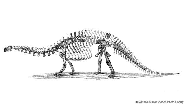 Апатозавър, т.е. бронтозавър. Credit: Nature Source/Science Photo Library