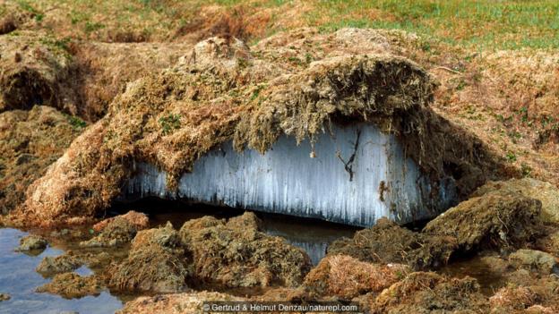 Вечна замръзналост в Тибетското плато. Credit: Gertrud & Helmut Denzau/naturepl.com