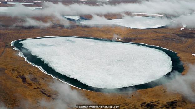 Вечно замръзналата тундра в Сибир. Credit: Staffan Widstrand/naturepl.com