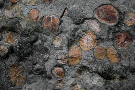 Клъстер от подобни на камъчета камари може да са останки от последното хранене на нодозавъра.