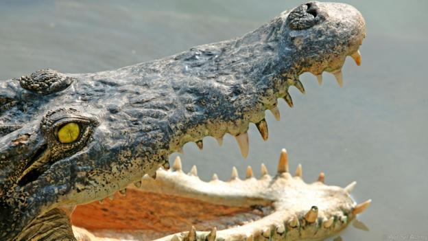 Крокодилите са опортюнистки хищници. Credit: Agf Srl/Alamy