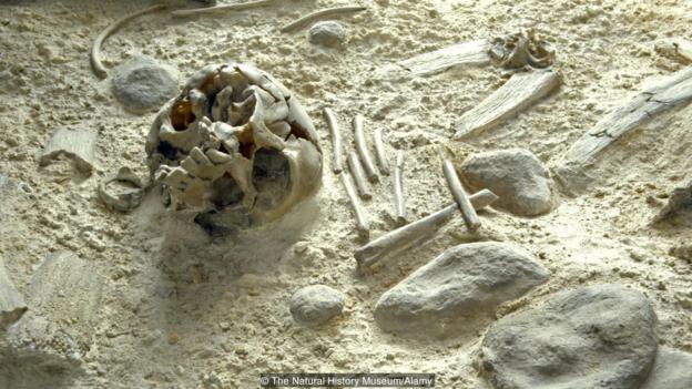 Някога в Сибир са живели неандерталци. Credit: The Natural History Museum/Alamy