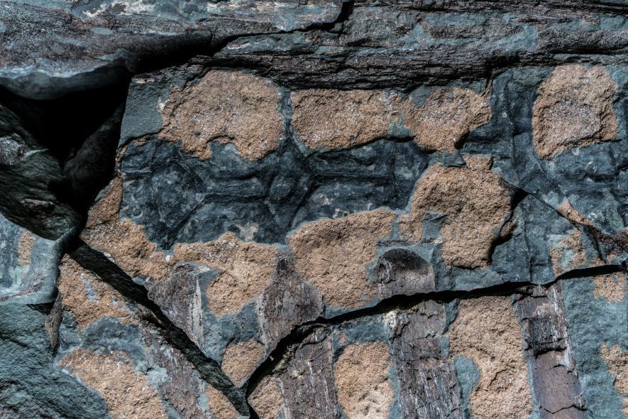 По торса на нодозавъра шоколадово-кафяви ребра стоят до жълто-кафяви остеодерми и тъмносиви люспи. Сухожилията, които някога поддържали опашката на динозавъра (най-горе) се намират около гръбначния му стълб, запазени като тъмнокафяви ивици. Credit: Robert Clark