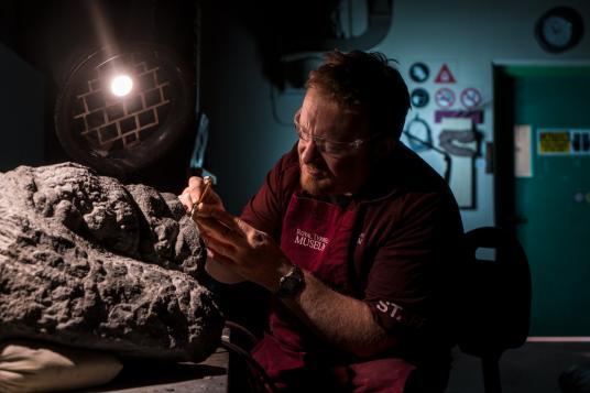 """Техникът Mark Mitchell от Кралския музей """"Тирел"""" бавно изчиства крака на нодозавъра и люспестите му лапи от заобикалящата ги скала. Внимателната работа на Mitchell ще запази за години наред загадъчните черти на животното. Credit: Robert Clark"""