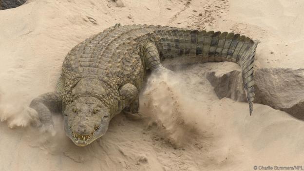 Те често излизат на сушата. Credit: Charlie Summers/NPL