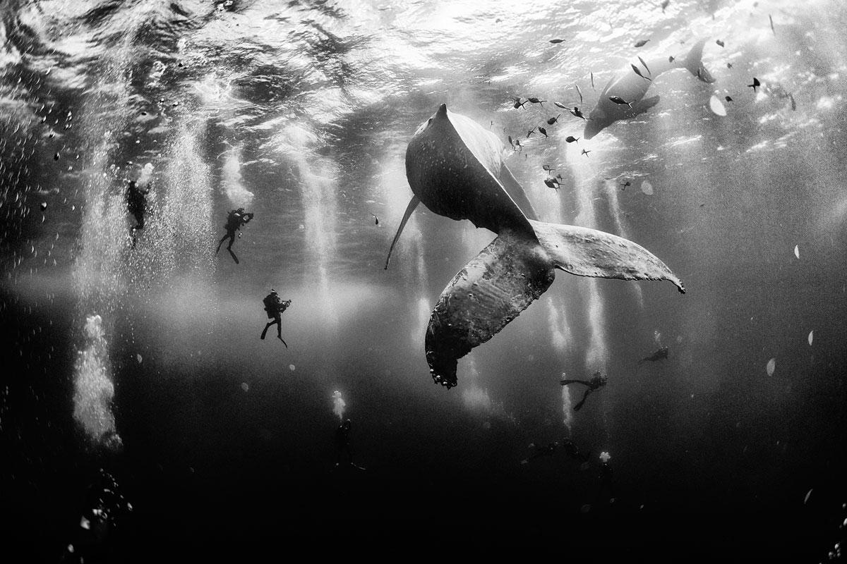 Приключи конкурса National Geographic за снимка 2015