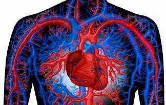 Създадена е успешна стратегия за регенериране на кръвоносните съдове