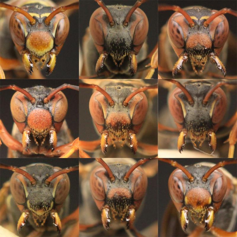 Oсите еволюирали за да разпознават лица