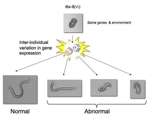 Защо едни и същи мутации действат различно на различни хора