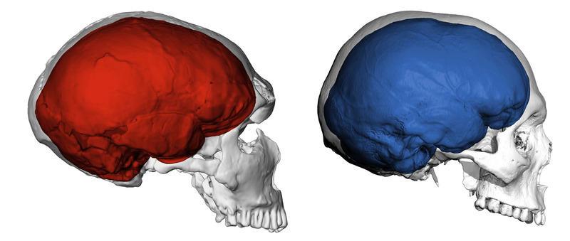 В сравнение с неандерталците ние имаме по-добро обоняние
