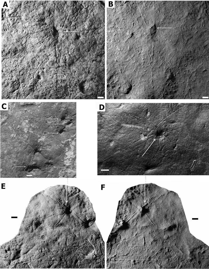 Открит е най-старият скелет в Австралия