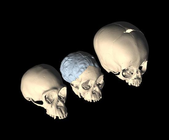 Антрополози намират обяснение за еволюцията на мозъка при хората