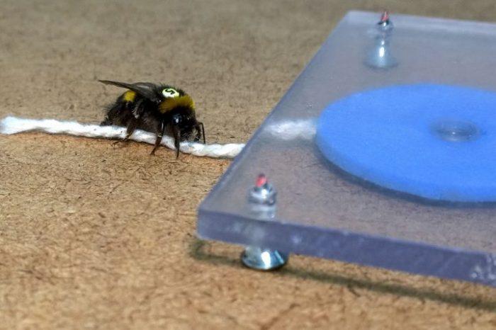 Земните пчели показват признаци на култура и вероятно способност за работа с инструменти
