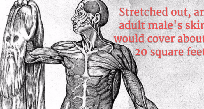 Невероятни факти за твоето тяло