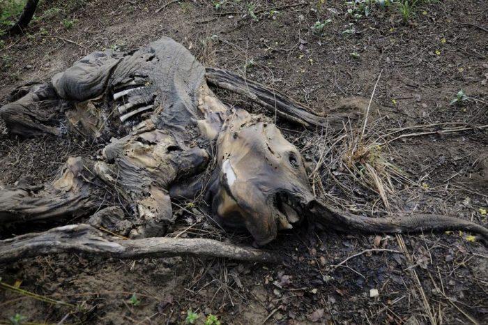 [АУДИО] Светът е на път да загуби две трети от дивите животни до 2020