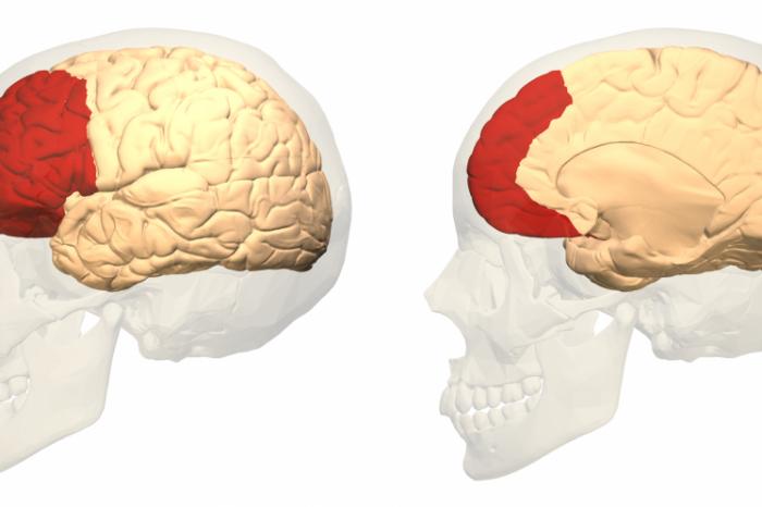 Хормон причинява спад в познавателните способности след социален стрес