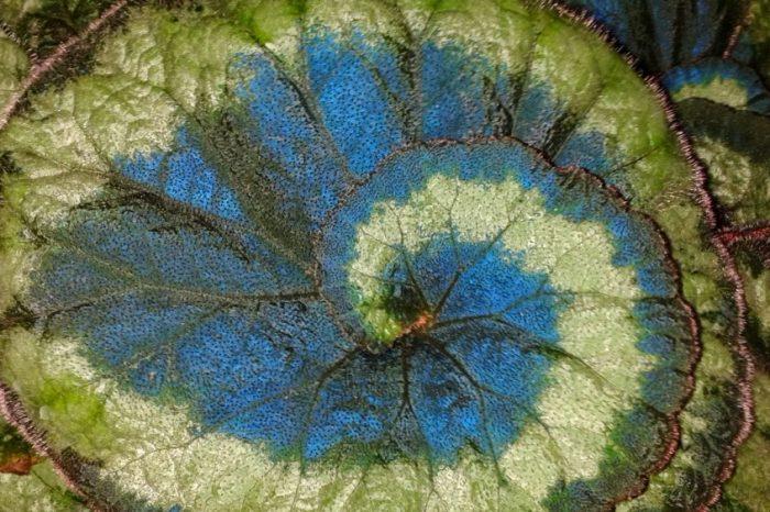 Сини листа помагат на растенията да получат допълнителна енергия от слънцето