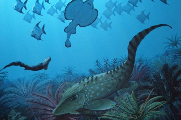 Масово измиране в древността води до доминация на дребните рибки