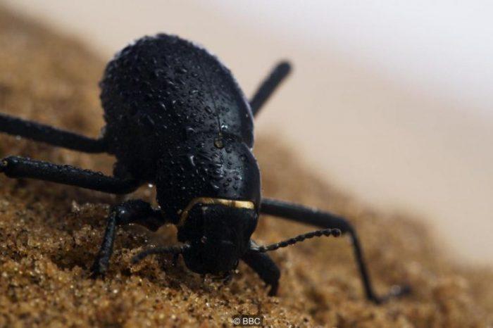 Гениални и хитри начини, по които дивата природа оцелява в пустинята