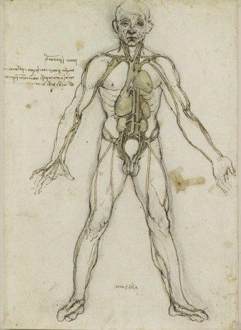 Невероятните анатомични рисунки на Леонардо да Винчи: достъпни за сваляне онлайн
