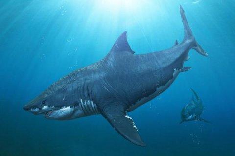 Акулата мегалодон е загубила борбата, поради намаляване количеството на храната