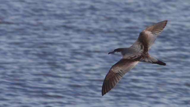 Ловци на птици минават северноамерикански рекорд