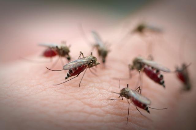 Химическо привличане: защо комарите предпочитат едни хора, а други - не