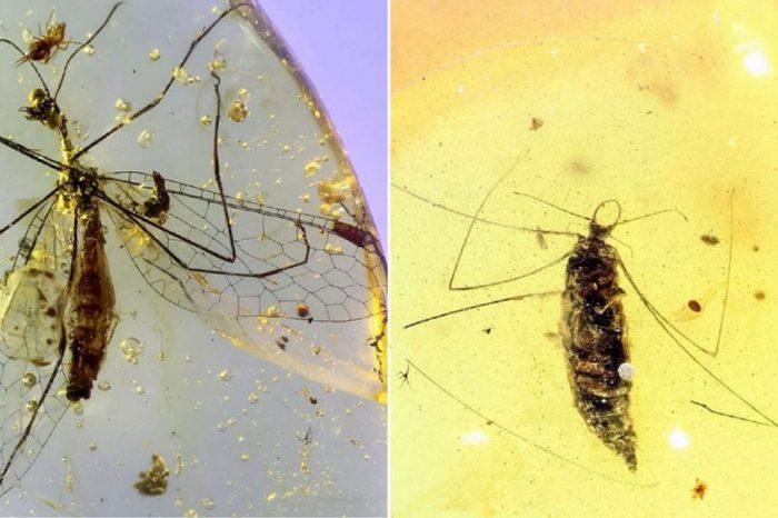Това древно бебе насекомо е било страховит убиец на паяци
