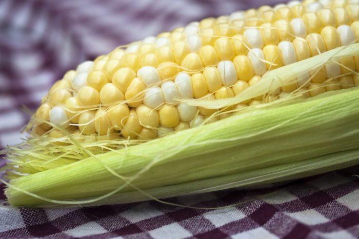 Доклад: генетично модифицираните растения са безопасни за консумация