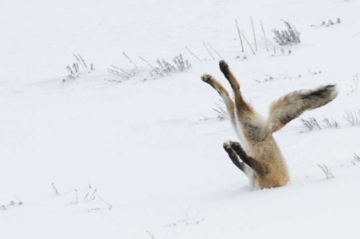 Невероятно смешните победители в конкурса The Comedy Wildlife Photo Awards 2016