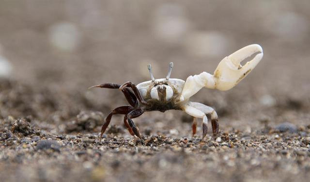Преглед на последните открития в поведението на животните