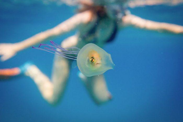 Рибка влиза в медуза
