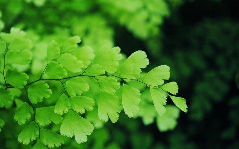 Видео: Въздушните мехурчета са вредни за пресъхналите растения