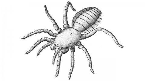 Древен роднина на паяците подсказва как е започнало плетенето на паяжини