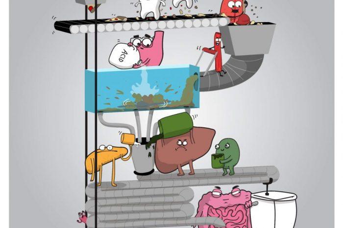 Комикс: Как работи храносмилателната система