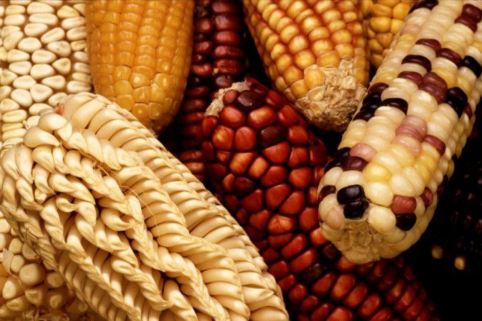 """Всички хранителни продукти са """"генетично модифицирани"""" по определен начин – къде да теглим чертата?"""