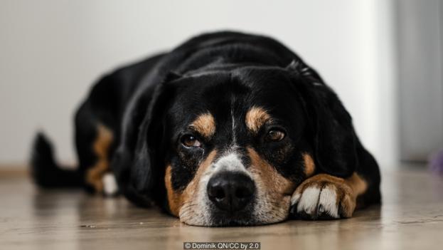 Много животни изглежда прекратяват живота си, но това не е самоубийство