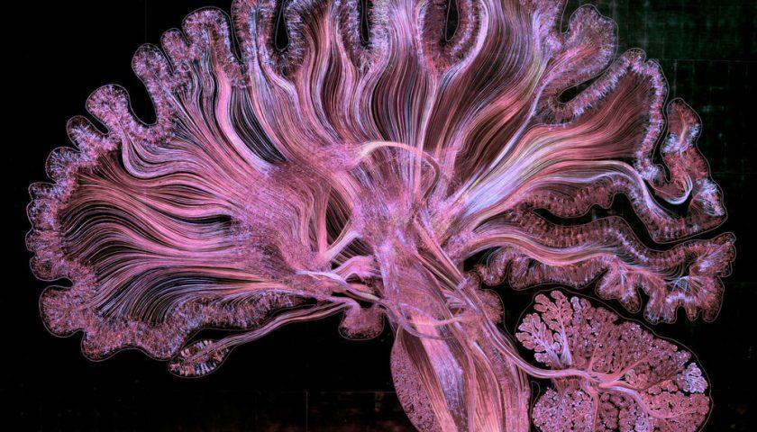 Стотици хиляди неврони в мозъка. Credit: Greg Dunn, Brian Edwards, and Will Drinker