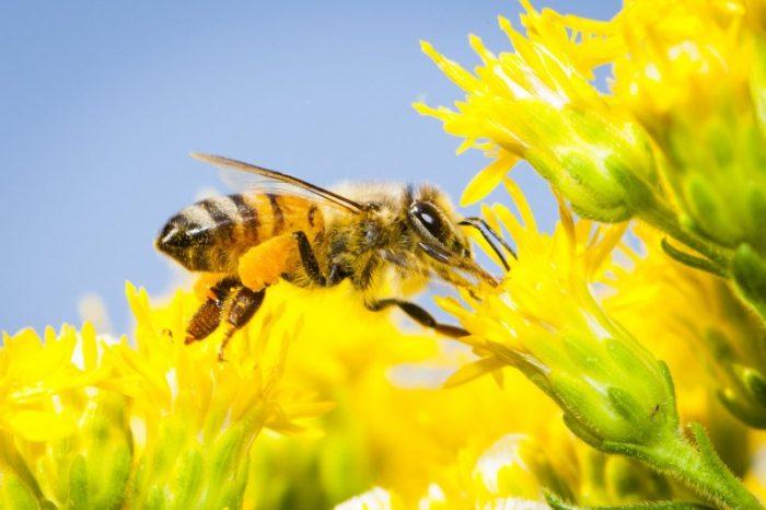 Европа е на път да наложи пълна забрана на вредните за пчелите пестициди