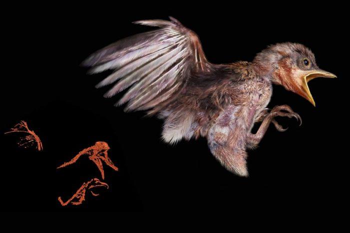 [АУДИО] Открита е най-добре запазената древна птица в кехлибар