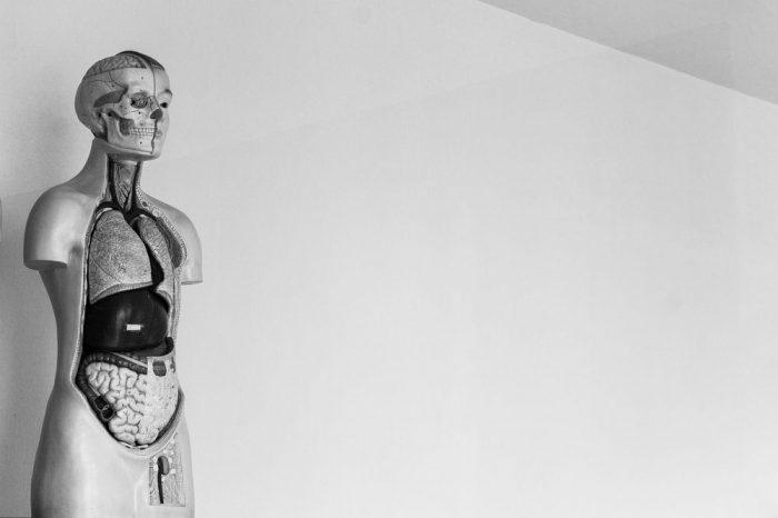 11 нови факта, които науката разкрива за човешкото тяло