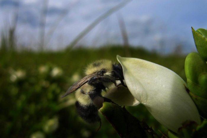 От архива: Пчелите се лекуват от природната аптечка
